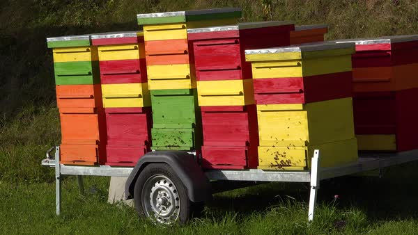 Multicolored bee boxes sit on a trailer in Slovenia. Royalty-free stock video