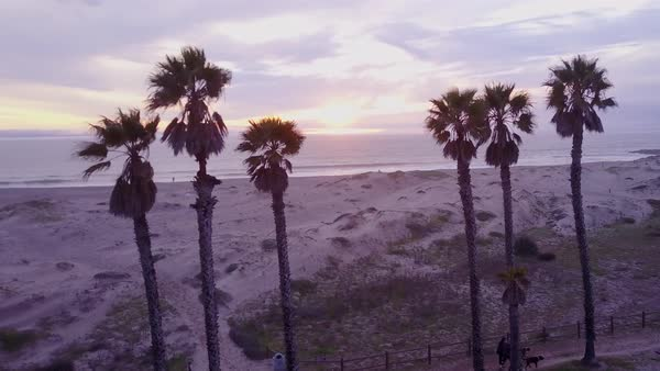 Nice aerial through palm trees reveals a California beach scene. Royalty-free stock video
