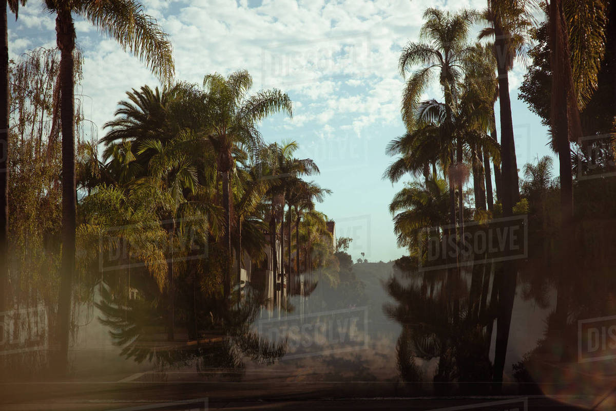 View of palm trees Royalty-free stock photo