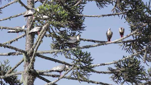 Static shot of and low angle view of birds resting on branches Royalty-free stock video