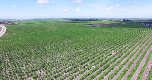 Aerial shot of a fruit field Royalty-free stock video