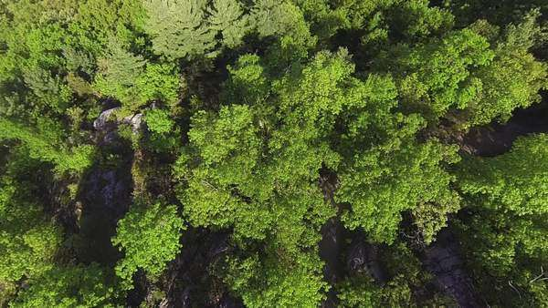 Aerial of large forest Royalty-free stock video