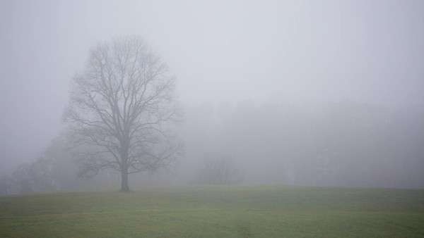 Tree in field hidden by fog Royalty-free stock video