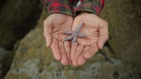 Starfish in hands Royalty-free stock video