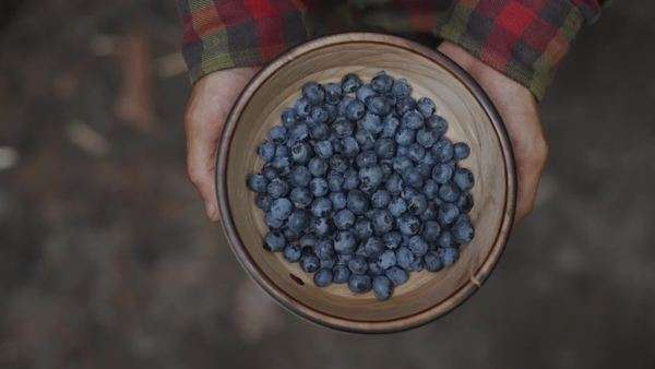 Hands holding wooden bowl filled with blueberries Royalty-free stock video