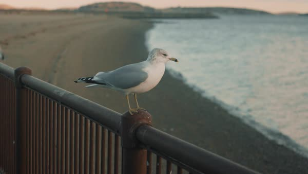 Seagull on railing flies away Royalty-free stock video