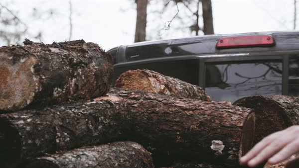 Hand-held shot of a man removing logs from a pickup truck Royalty-free stock video