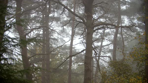 Looking through trees in autumn woodland on a misty morning Royalty-free stock video