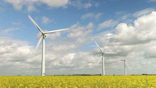Group of wind turbines in a field of yellow oilseed rape. Royalty-free stock video