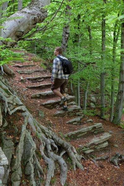Young man walking on stairs in the forest of Piedmont, Italy Royalty-free stock photo