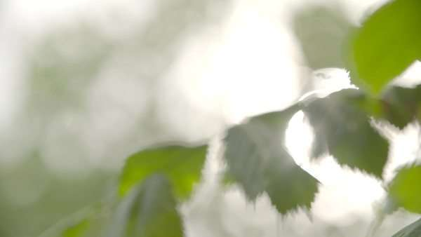Leaves in summer breeze in slow motion above flowing water Royalty-free stock video