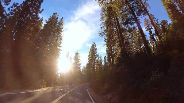 POV driving sun flare rural mountain country road spruce tree blue sky USA Royalty-free stock video