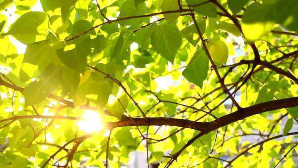 Sunbeams and green leaves background Royalty-free stock video