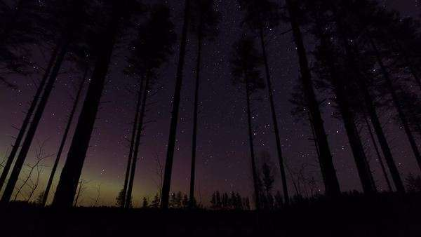 Timelapse of stars moving in the nightly sky with Nordic Lights in the horizon behind a Nordic pine forest. Royalty-free stock video