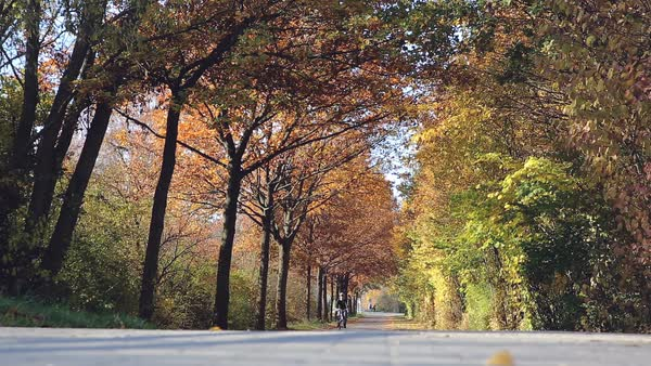 Brightly colored autumnal trees form a vault over a park road as a woman on a bicycle rides by with her daughter in a backseat basket behind her.  Royalty-free stock video