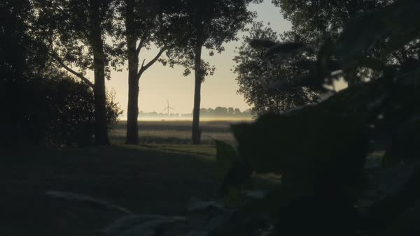 The sunrises over a farm field and trees blanketed by a morning shade. A picturesque idyll, silhouettes of tress.  Royalty-free stock video