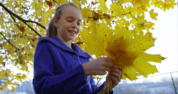 Beautiful girl counting the yellow leaves she collected  Royalty-free stock video