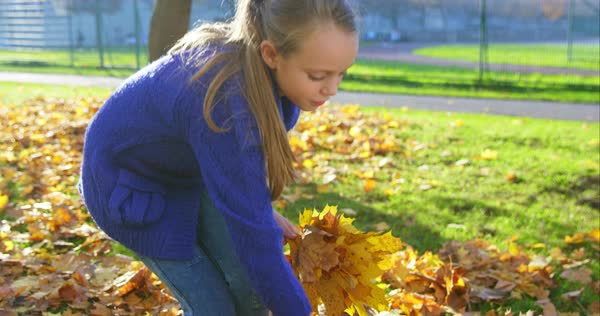 Girl picking up yellow leaves on sunny autumn day Royalty-free stock video
