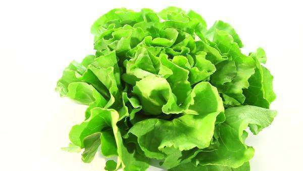 Fresh green salad lettuce Royalty-free stock video