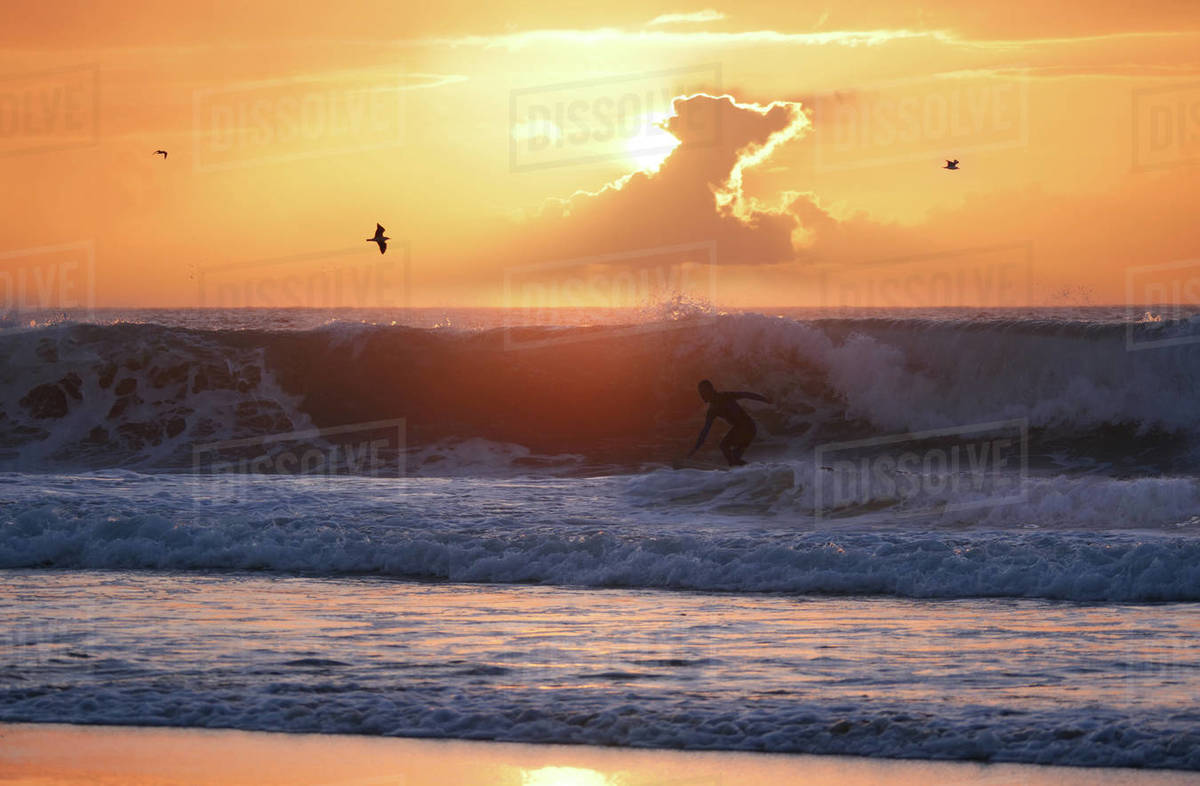 Surfer riding the waves with a surfboard in the late evening at golden sunset. Sun setting over the ocean at a popular surfing destination. Colorful sky at sundown over Fuerteventura.  Royalty-free stock photo