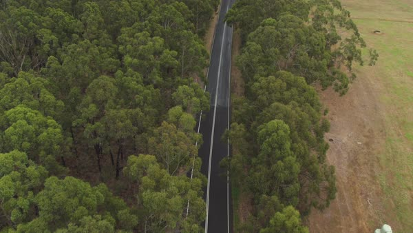AERIAL, MOVING FORWARD: White SUV car driving along straight highway road in the middle of beautiful green lush eucalyptus tree forest and vast green meadow field with hay bales lying along the road Royalty-free stock video