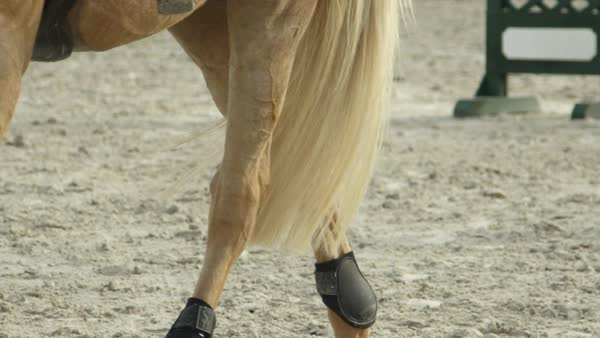 CLOSE UP, SLOW MOTION, DOF: Beautiful palomino horse getting ready for jumping show. Powerfull gelding walking in sandy riding arena preparing for competition. Detail of horse legs and tail in manege Royalty-free stock video