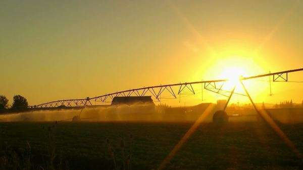 Setting sun over crops being watered Royalty-free stock video
