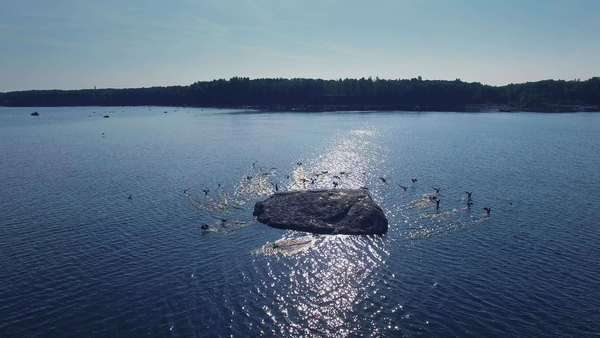 Aerial drone shot of a flock of birds who sit on a rock at sea and suddenly start to fly away. Royalty-free stock video