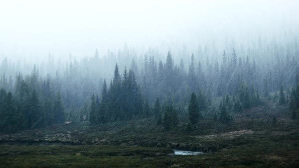 Wide shot of a forest in rainfall Royalty-free stock video