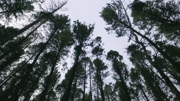 Low-angle shot of trees in a forest Royalty-free stock video