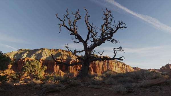 Panning wide shot of bare tree and rock formations in Capital Reef State Park / Capital Reef State Park, Utah, United States, Rights-managed stock video