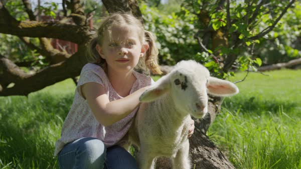 Medium slow motion shot of girl petting lamb in field Royalty-free stock video