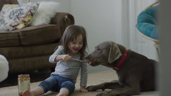 Medium shot of girl feeding peanut butter to dog Royalty-free stock video
