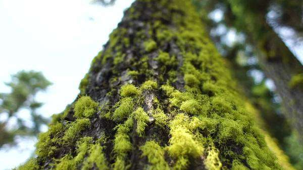 Close-up of tree moss Rights-managed stock video