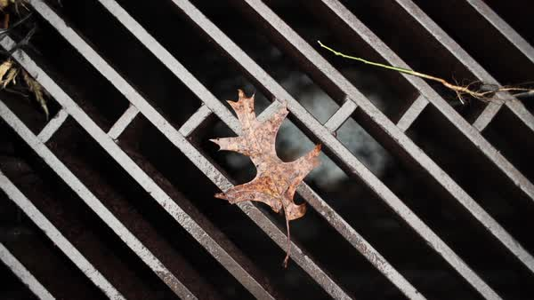 Close up shot of a leaf on a storm drain Rights-managed stock video