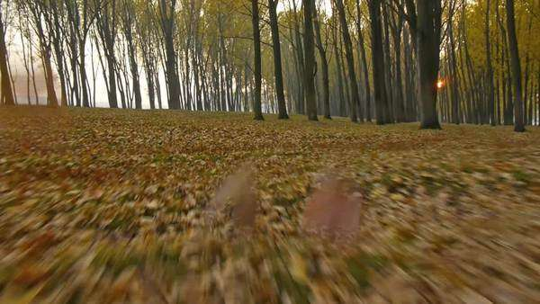 Slow and low flying through the autumn forest. Royalty-free stock video