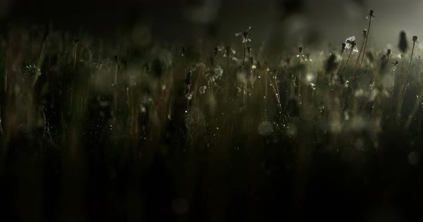 Dark atmospheric low shot of weeds at night lit from the side Royalty-free stock video
