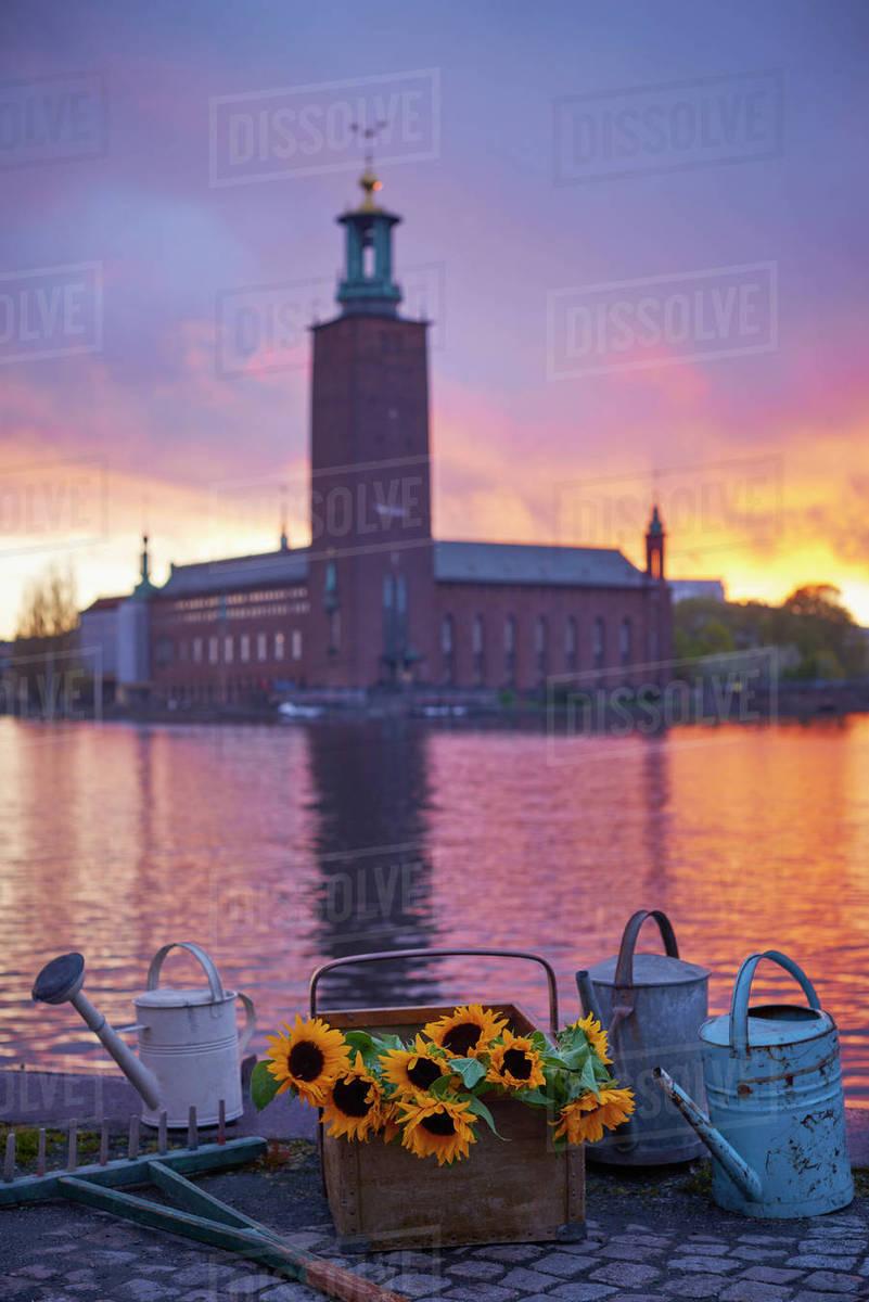 Sunflowers At Sunset Stockholm City Hall On Background Stock Photo Dissolve