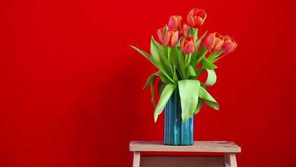 Young  girl brings a vase of tulips and leaves it close to red wall Royalty-free stock video