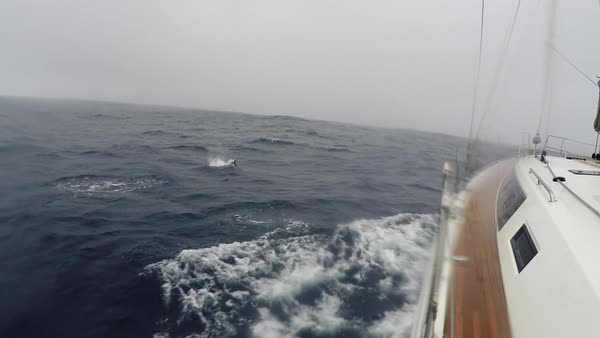 Yacht sails through the large foamy sea waves in the cloudy stormy weather. Dolphins swim in the sea, near the yacht. Sea view through the deck of the yacht Royalty-free stock video