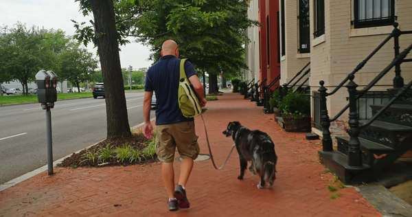A man walks his dog in the Capitol Hill neighborhood of Washington, D.C. Royalty-free stock video