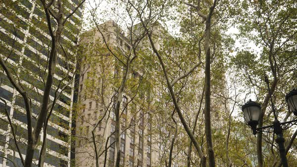 A static shot of typical Manhattan office buildings as seen through the trees of Bryant Park in the Autumn.   Royalty-free stock video