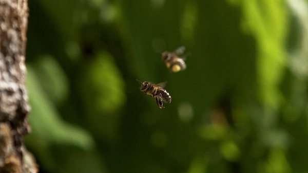 api - Stock Videos - Dissolve