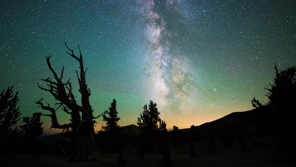 Bristlecone Pine Forest Milky Way Stars Timelapse California Rights-managed stock video