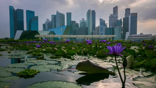 Singapore Flowers and Skyline Timelapse Royalty-free stock video