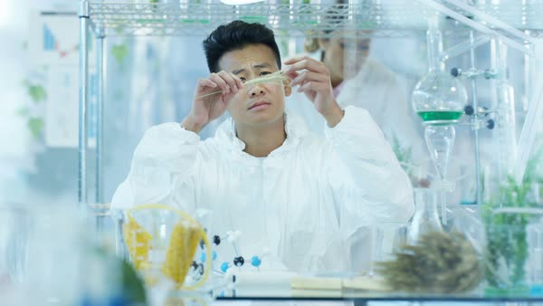 Scientific researcher in laboratory analyzing plant and food samples Royalty-free stock video