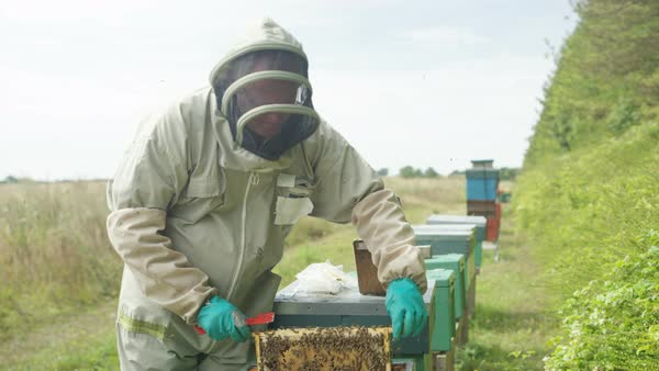 Portrait smiling bee keeper holding honeycomb from the hive Royalty-free stock video