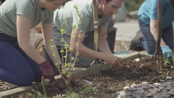 Volunteer team working in community allotment digging soil and planting. Royalty-free stock video