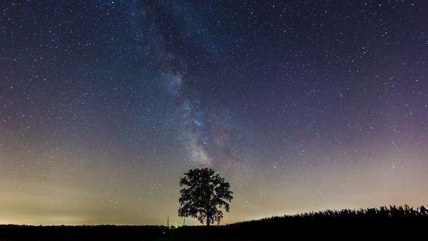 Milky Way passes over a lone tree in a corn field time-lapse Royalty-free stock video