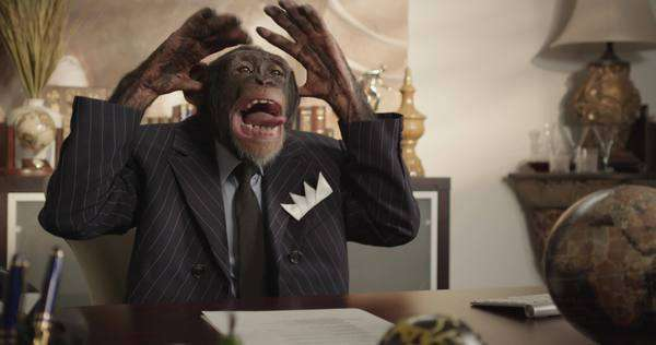 Handheld shot of a mocking monkey in a suit Royalty-free stock video
